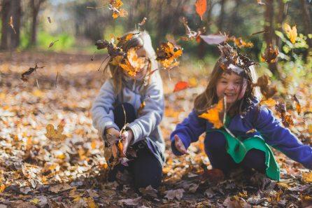 autumn-blur-bokeh-1582736 (1)
