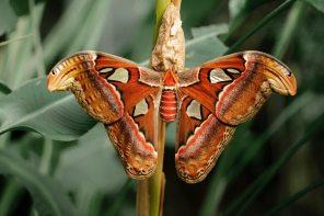 beautiful-biology-blur-920596