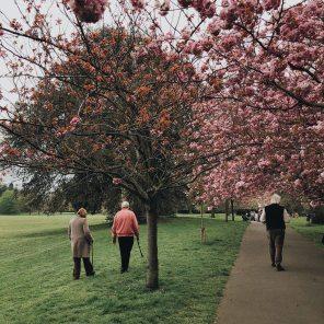 people-walking-near-trees-2253911